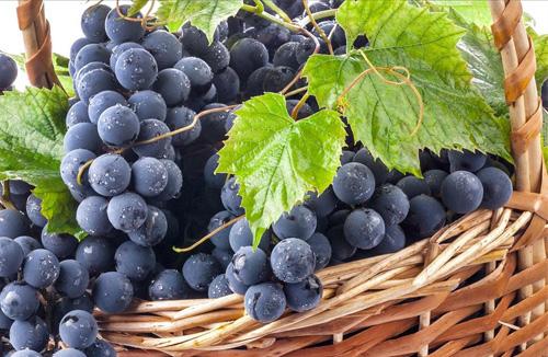 خواص کامل انگور، فواید انگور، خواص دارویی و درمانی انگور
