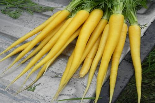 با قدرت بی نهایت هویج زرد آشنا شوید